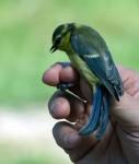 Sortie_oiseaux_12_DSC_9331.jpg